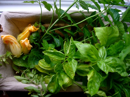 H&O squash blossoms, mint, basil, oregano, and arugula